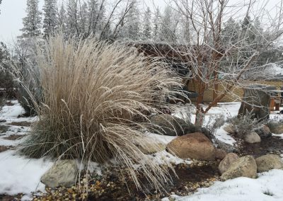 Beautiful display of ornamental prairie grass next to boulder fountain stream bed