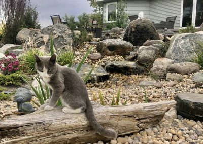 Its not only wildlife that enjoys hanging out by water features